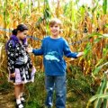 The Amazing Maize Maze: NYC's Only Corn Maze and Other Fall Fun at the Queens County Farm Museum