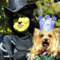 Halloween Goes to the Dogs: NYC Dog Costume Parades & Contests