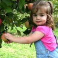 Apple Picking: Best Pick-Your-Own Orchards for Families with Toddlers in CT (Fairfield)