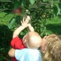 Apple Picking Near Boston - Pick Your Own Fun!