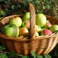 Apple Picking with Kids in Orange and Dutchess Counties
