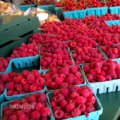 Berry Picking On Long Island: Pick Your Own Farms