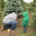 More Cut-Your-Own Christmas Tree Farms in Fairfield County, CT