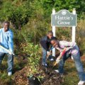 It's My Park Day and Other NYC Outdoor Volunteering Opportunities for Families