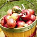 Pick Your Own Apple Orchards This Autumn in Eastern CT