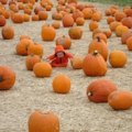 Pumpkins, Hay Rides and Fall Fun in Fairfield County