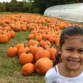 Pumpkin Patches: Where to Go Pumpkin Picking in Westchester & Hudson Valley