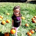 Pumpkin Picking with Kids in Hartford County, CT