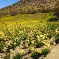 Spring Wildflower Hikes for Families in Southern California
