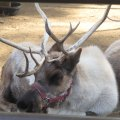 Santa's Reindeer Romp with Kids at the LA Zoo