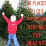 Cut-Your-Own Christmas Tree Farms Near NYC