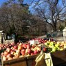 Pick up healthy eats at the weekly Ft. Greene Park Greenmarket