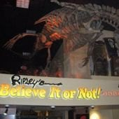 New Extreme Sleepovers at Ripley's Believe it or Not! Odditorium Museum