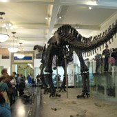 Hidden NY: 5 Fun Finds at the American Museum of Natural History