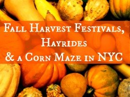 Fall Harvest Festivals, Pumpkin Patches, Corn Mazes and Hayrides Right Here in New York City 2014