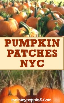 Pumpkin Patches Near NYC: Pumpkin Picking and Hayrides An Hour or Less From New York City