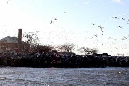 Spot Seals and Exotic Birds on a NYC Audubon Winter EcoCruise