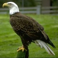 Bald Eagle Viewing in NYC: Winter Nature Fun for Kids