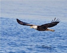 Winter Boat Cruises in CT: Seal and Eagle Watching