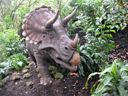 a Triceratops...
