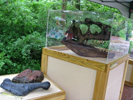 After your ride, learn more about dinosaurs by checking out fossils...