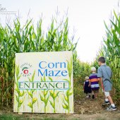 Things to do with kids: Corn Mazes for Kids and Families Near Boston