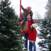 Things to do with kids: Cut-Your-Own-Christmas-Tree Farms on Long Island