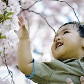 Things to do with kids: Best Places to See Cherry Blossoms in NYC