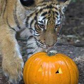 Things to do with kids: Say Boo at the Zoo (and Trick-or-Treat, too!): Halloween Zoo Events for LA Kids