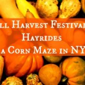 Things to do with kids: Fall Harvest Festivals, Pumpkin Patches, Corn Mazes and Hayrides Right Here in New York City 2014