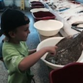 Things to do with kids: Family-Friendly Fish Markets in Fairfield County