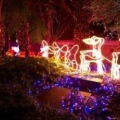 Things to do with kids: Holiday Light Shows in Hartford County