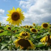 Things to do with kids: In Bloom! NJ Farms Where You Can Pick Your Own Flowers