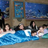 Things to do with kids: Museum Sleepovers on Long Island