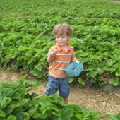 Things to do with kids: New Jersey's Best Summer Pick-Your-Own Farms