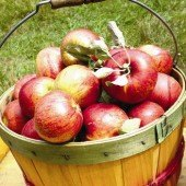 Things to do with kids: Pick Your Own Apple Orchards This Autumn in Eastern CT