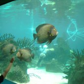 Things to do with kids: New York Aquarium: Plan a Fun-Filled Visit & Celebrate World Oceans Day
