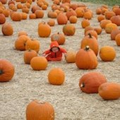 Things to do with kids: Pumpkins, Hay Rides and Fall Fun in Fairfield County