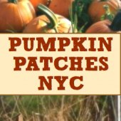 Things to do with kids: Pumpkin Patches Near NYC: Pumpkin Picking and Hayrides An Hour or Less From New York City