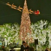 Things to do with kids: Tree Lighting Celebrations That Kick off the Holidays around LA