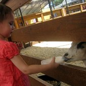 Things to do with kids: White Post Farms: Long Island Day Trip to Meet the Animals