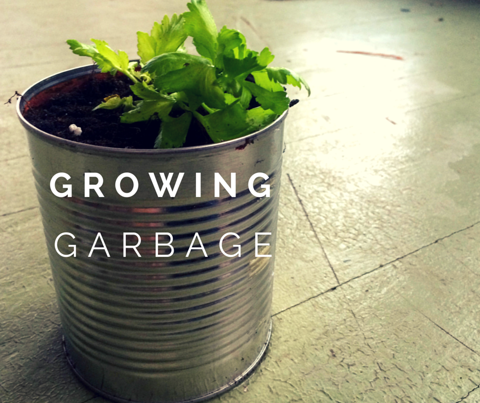 10 Vegetables You Can Regrow Yourself From Kitchen Scraps: Growing Celery And 10 Other Kitchen Scraps You Can Plant