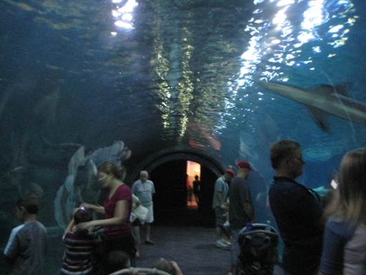 Adventure Aquarium In Camden Offers A Hands On Experience