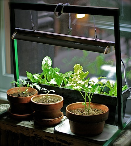 Indoor Garden Apartment My apartment garden how to grow an indoor herb or vegetable garden img6568g workwithnaturefo