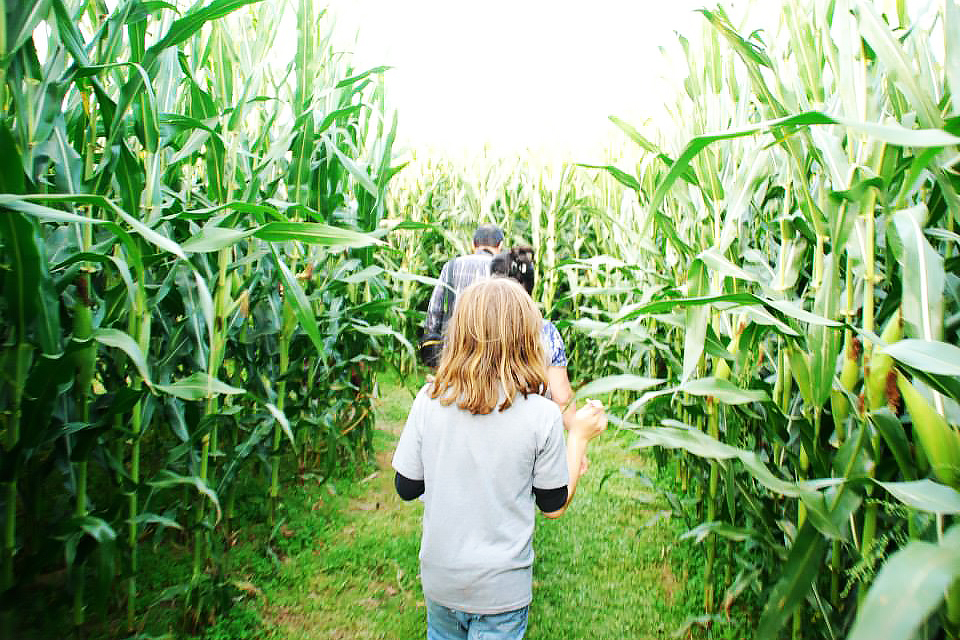 Amazing Corn Mazes at Family-Friendly New Jersey Farms