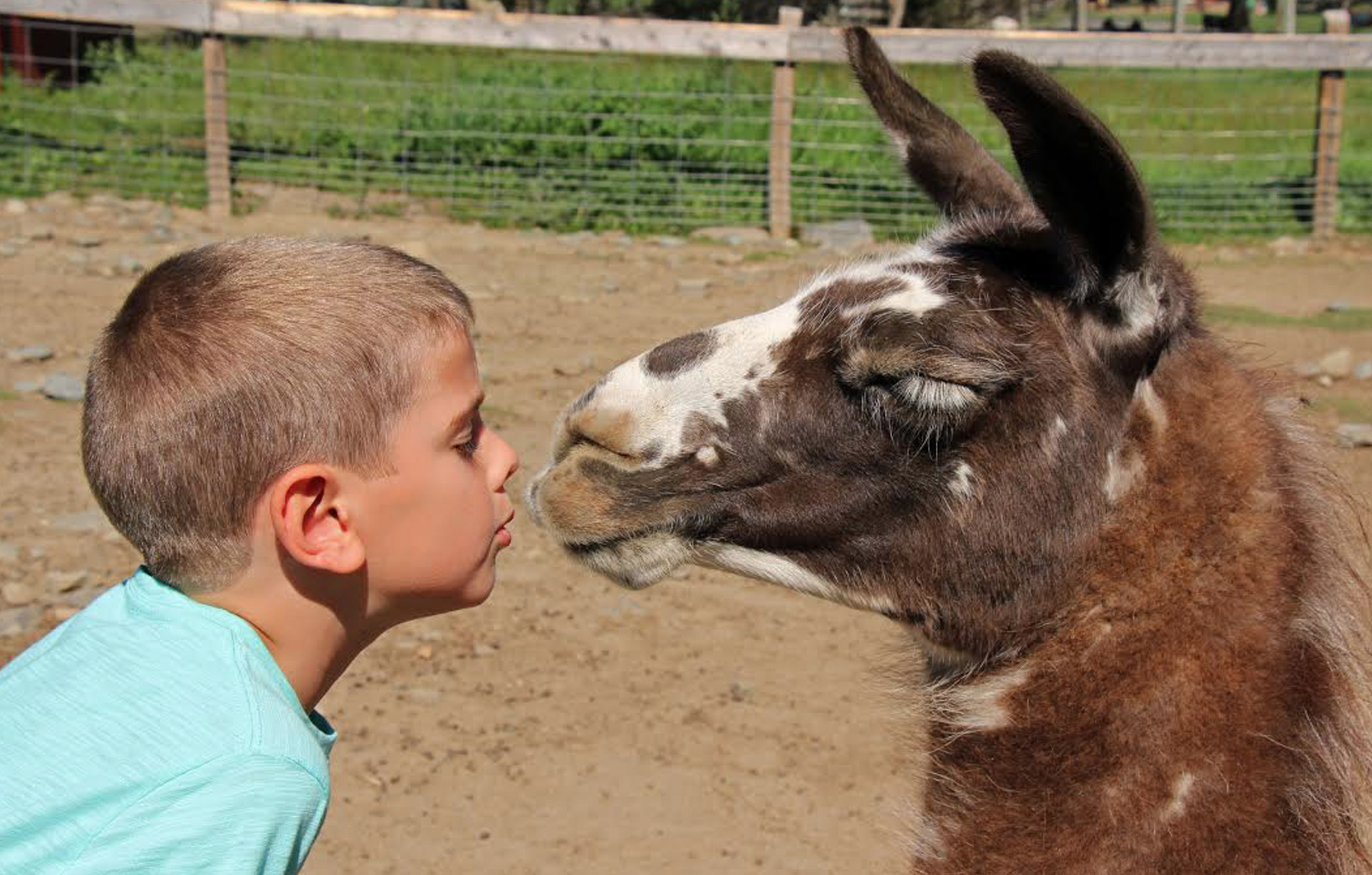 Animal Farms And Petting Zoos For Boston Kids Mommypoppins