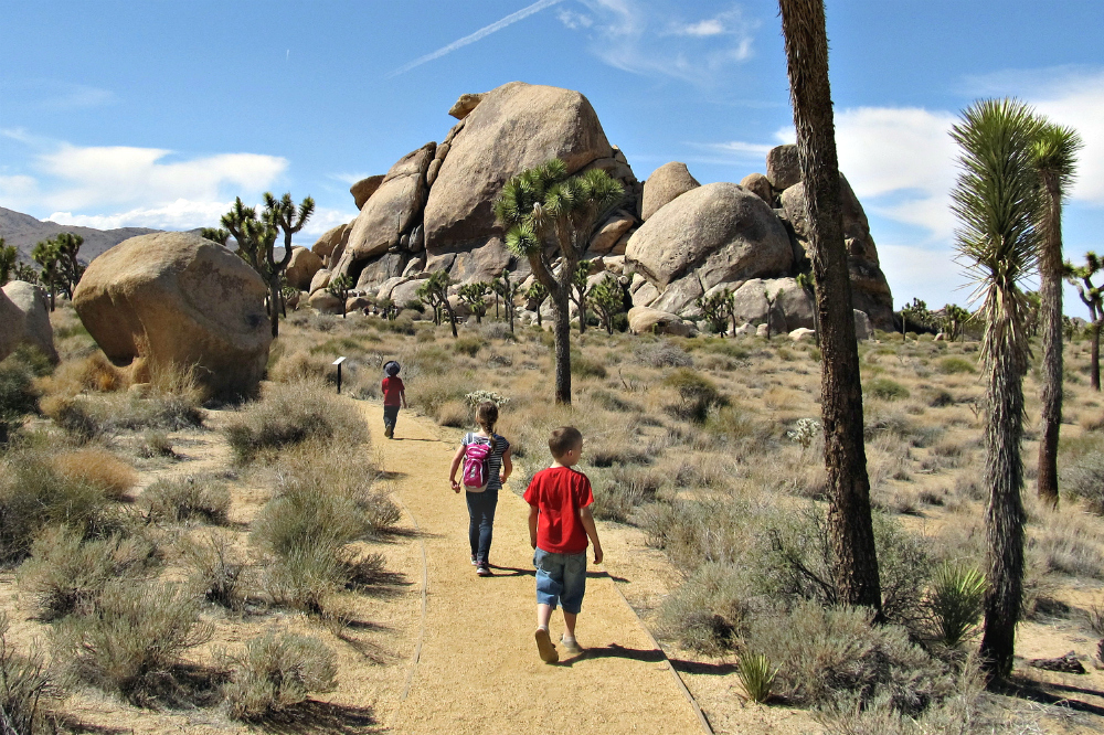 Joshua Tree 12 Things Not To Miss With Kids In This Desert National