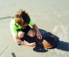 Horsehoe crab on The Sanctuary beach