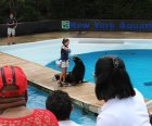 The New York Aquarium's sea lion show is  a hit with kids.