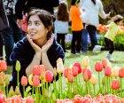 The Albany Tulip Festival. Image courtesy of Yuliya Peshkova Photography.